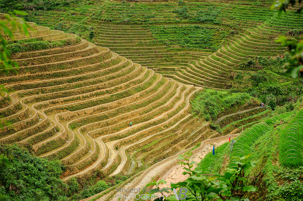 Longji Terraced Fields Scenic Area, Tiantouzhai, China