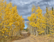 The Aspens. Estes Park Colorado. Photo©SuziAltman