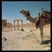 Syrie- Palmyra-september 2002.<br />Ooit een belangrijke stad voor de karavaans op de zijde route.<br />Nu een van de toeristische toplocaties midden in de Syrische woestijn.<br />Foto: Sake Elzinga-Hollandse Hoogte