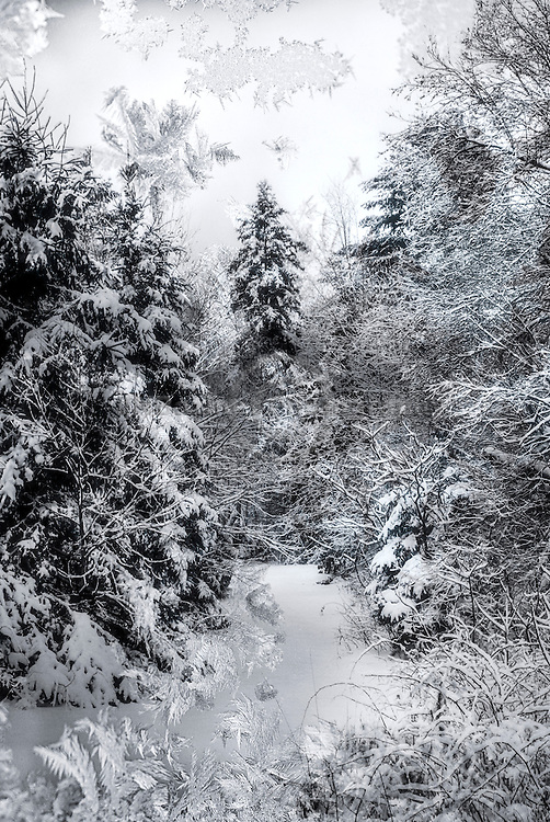 Composite image of frost covered forest scene with fresh fallen snow.