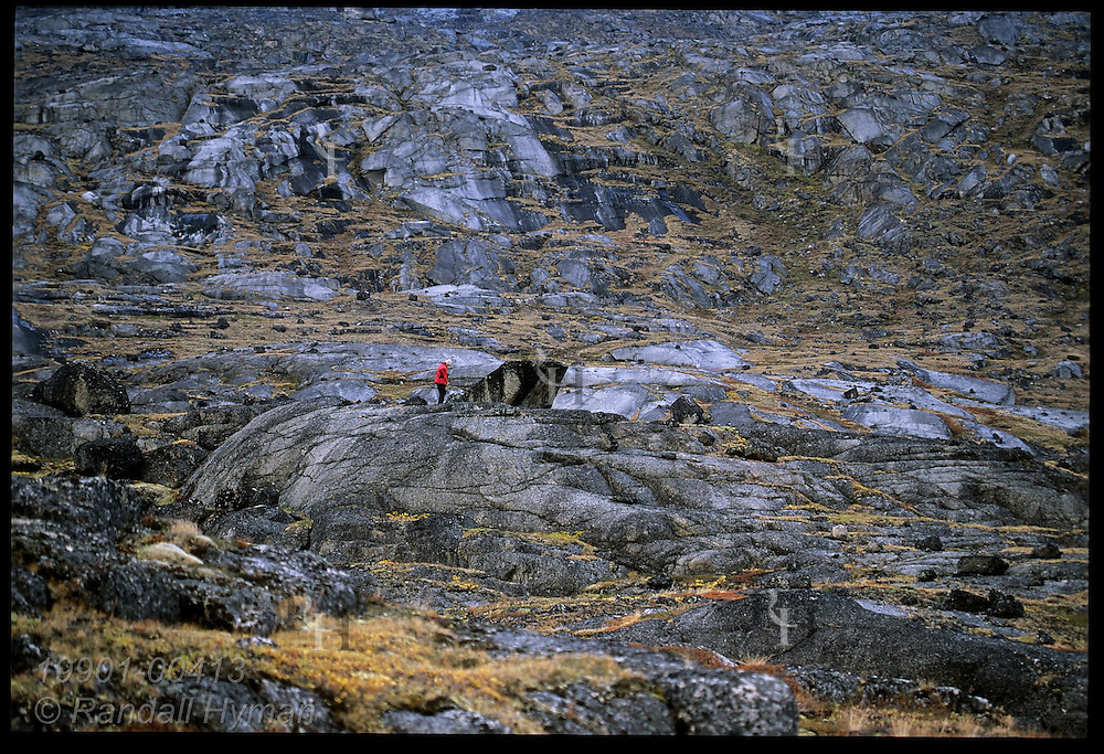 Broad hillside of granite outcrops dwarfs hiker in red jacket in late August at Tasiusaq Bay, northwest Greenland.