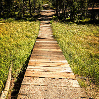 I was trying to get ahead of my son while hiking only to capture the lovely architecture created by this boardwalk winding through the forest of Yellowstone.