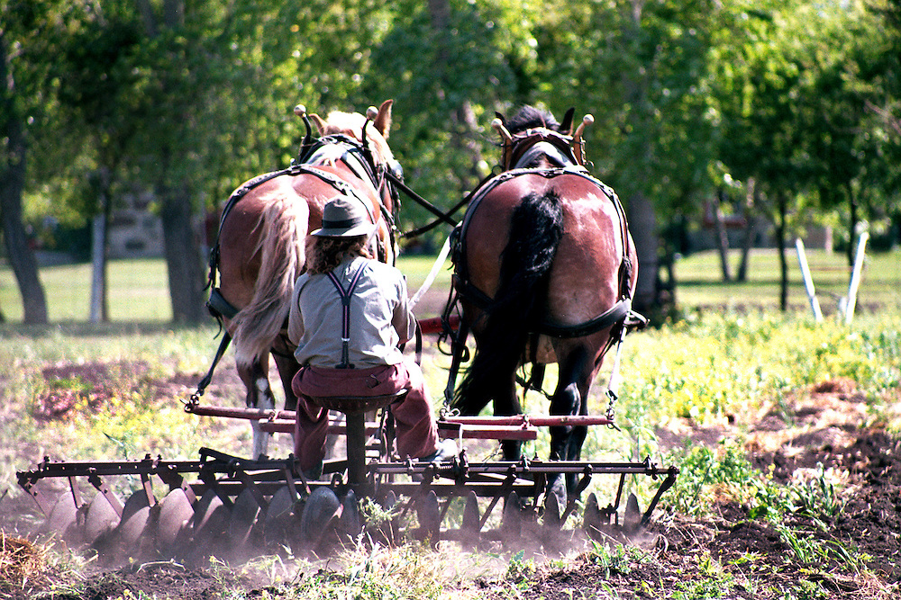 Team of horses at work discing, Motherwell Farm Saskatchewan