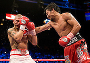 Manny Pacquiao cathces  Miguel Angel Cotto of Puerto Rico with a right hook in their WBO Welterweight Championship fight at the MGM Grand Garden Arena on November 14, 2009 in Las Vegas, Nevada. Pacquiao won his seventh world title in as many divisions