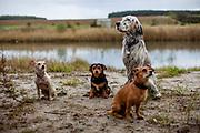 """English Setter Welpe """"Rudy"""" am 07.10. 2017 am Teich von Stara Lysa, (Tschechische Republik) mit seinen Freunden Cintynka, Thor and Nui. Rudy wurde Anfang Januar 2017 geboren und ist vor einiger Zeit zu seiner neuen Familie umgezogen."""