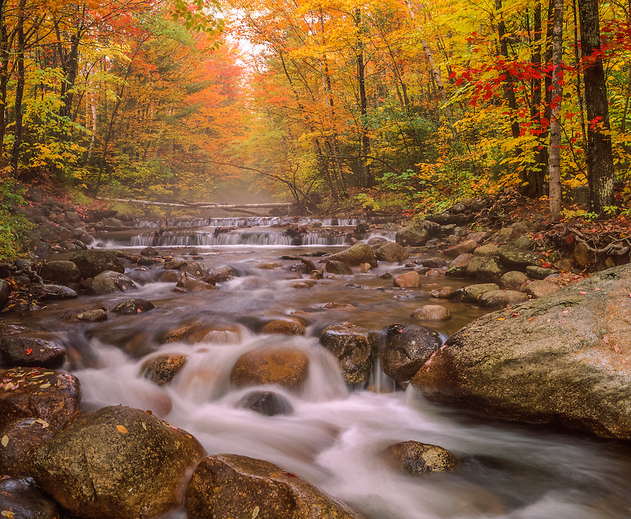 Smarts Brook with fall mist & yellow woods, Waterville Valley, NH