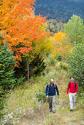 Two men walk a woods road in fall in Reddington Township, Maine. Near Crocker Mountain. High Peaks Region.