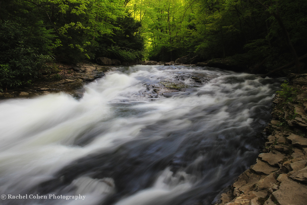 &quot;Forest Stream&quot; <br />