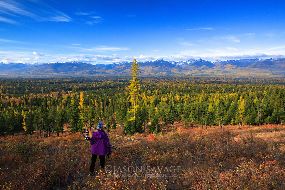 Photographers gazes across the massive expanse of larch forest in Montana's Swan Valley.