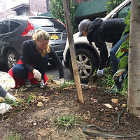NYC parks Brooklyn Plant A Tree Day