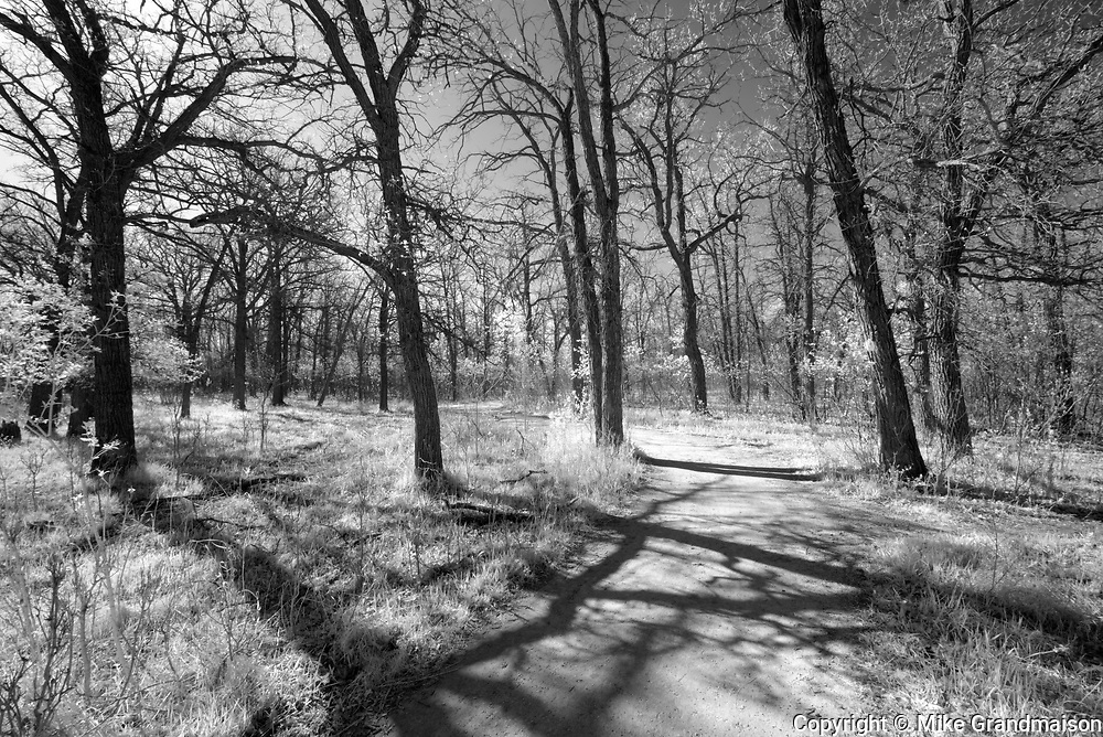 Path aong the trees in the Seine River Forest<br />Winnipeg<br />Manitoba<br />Canada