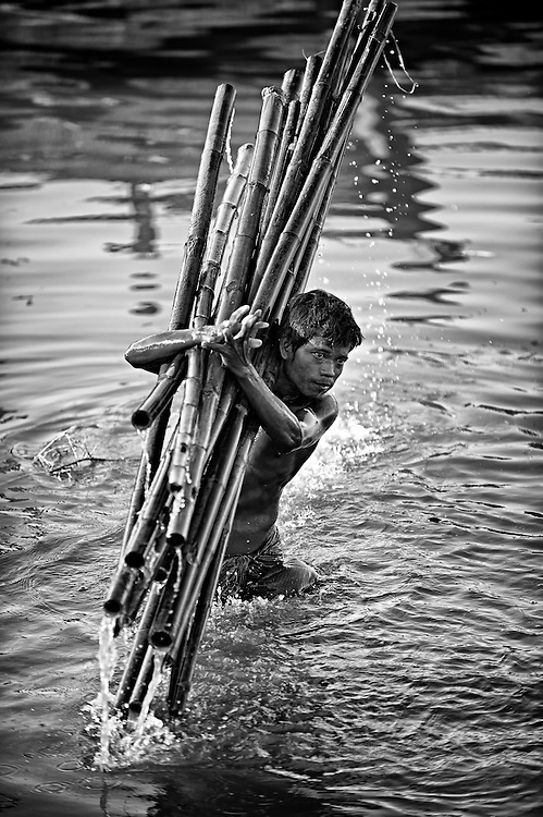 A man taking bamboo from the Irrawaddy river, Myanmar to load on a truck, it's heavy and slippery work and bamboo has very sharp notches, a tough job.