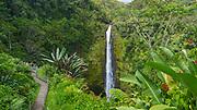 Akaka Falls State Park, Hamakua Coast, Island of Hawaii