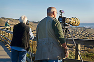 Tourists looking at the Northern Elephant Seal (Mirounga angustirostris) colony at Piedras Blancas, near San Simeon, San Luis Obispo County, California