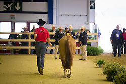 Matyas Gobert, (BEL), Chicy Smart Jac - Horse Inspection Reining  - Alltech FEI World Equestrian Games™ 2014 - Normandy, France.<br /> © Hippo Foto Team - Dirk Caremans<br /> 25/06/14