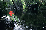 Atlantic Forest Flower<br />
