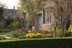 Wallflowers and tulips in the Cottage Garden at Sissinghurst Castle Garden in spring.