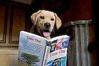 "23/05/2013. Max a Labrador pup at the launch of ""Time Out"" , an Innovative collaboration of words, reflections and stories of goodness, tenderness and positivity for all our lives combine to great effect in this new publication 'Time Out' by Author Ronan Scully of Self Help Africa and Operation Transformation fame. The book is in aid of  Self Help Africa and The Irish Guide dogs for the Blind in the Hotel Meyrick , Eyre Square  Galway.  Picture:Andrew Downes"