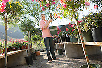 Young Man Holding Small Flowering Tree at Nursery