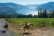 Celilo Vineyards, Columbia Gorge AVA, Washington