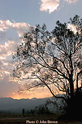 A tree is silhouetted against the setting sun near Pai, Thailand.