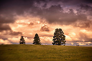 Rolling hills and storm clounds with three trees near McCall Idaho.