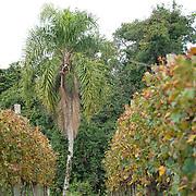 Vignes et palmiers