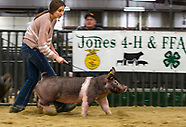 Jones 4-H and FFA Blue and Gold Swine Show