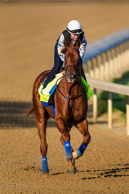 April 29, 2015: Dortmund gallops in preparation for the Kentucky Derby at Churchill Downs Louisville Ky. Alex Evers/ESW/CSM
