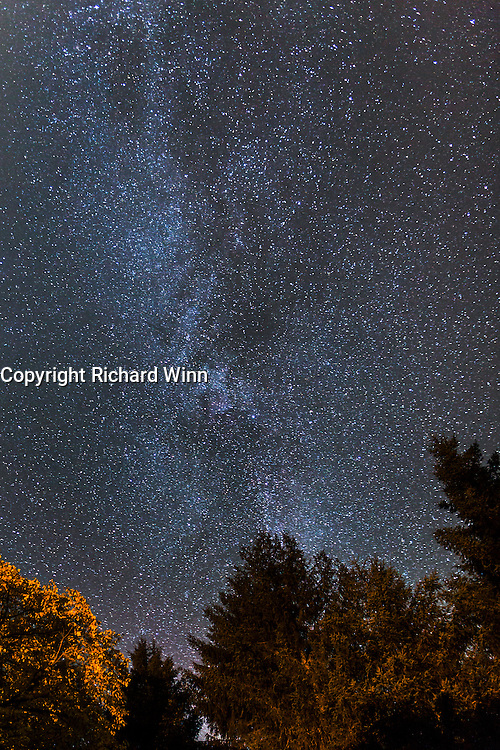 The Milky Way with trees from the Aigas Field Centre in the foreground.