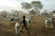 A Mundari boy walks through a cattle camp in Central Equatoria Province. This pastoralist tribe suffered from inter-tribal conflicts and cattle rustling in the northern part of the province and were forced to move further south in search of safer grazing land. Cattle are their only form of wealth and are all-important to the culture and identity of Sudan's pastoralist tribes. They depend on the region's water resources, grazing lands and the seasonal cycles of rain for the survival of their nomadic way of life. Prolonged periods of drought and erratic rains in the Horn of Africa caused by climate change are threatening the herds and exacerbating tribal conflicts in the fragile young nation.<br /> Kuruki, South Sudan. 12/10/2009.
