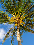 Low-angle view of a palm tree on a beach in Koloa, Kauai, Hawaii, US