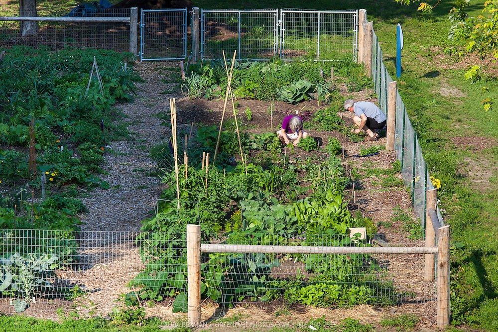 Gardeners working in an urban community vegetable garden.