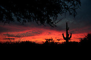 SCOTTSDALE, AZ - OCT 25: Silhouette of the desert skyline as the sun sets. (Photo by Jennifer Stewart)