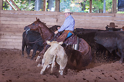 September 23, 2017 - Minshall Farm Cutting 5, held at Minshall Farms, Hillsburgh Ontario. The event was put on by the Ontario Cutting Horse Association. Riding in the Non-Pro Class is J P Gravel on Red Hott Twister owned by the rider.