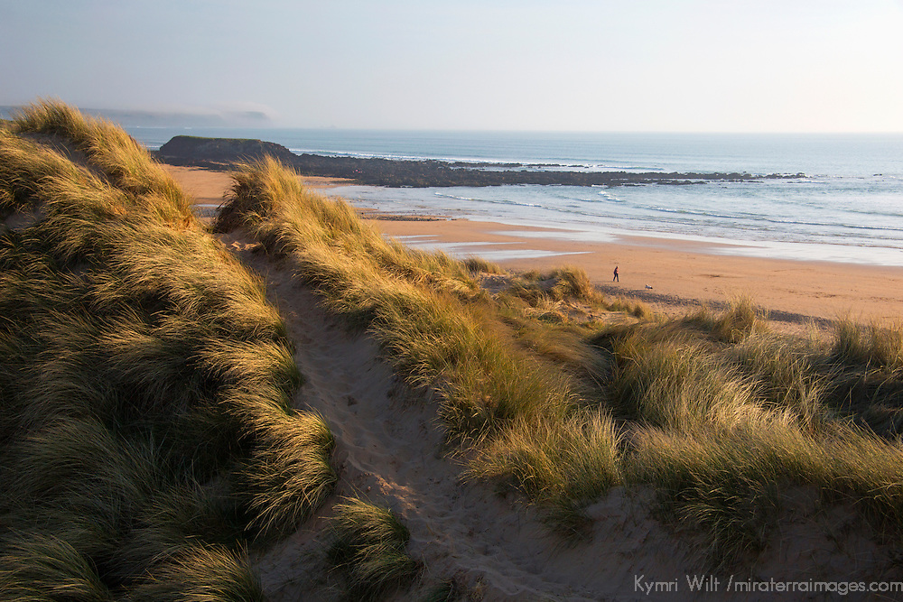 Europe, United Kingdom, Wales, Pembrokeshire. Dunes of Freshwater West Beach, Pembrokeshire, Wales.