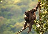 Sierra Leone photos
