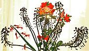 Eastern USA Landscapes, Floral Art,