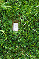 A electrical outlet in the ground surrounded by green grass.