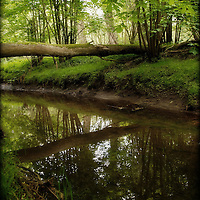 Reflections in a small river flowing under a fallen tree in woodland in Suffolk, England.