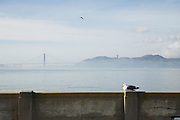 a view to the Golden Gate Bridge, San Francisco