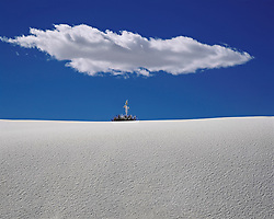 Small cluster of yucca plants atop a dune, with deep blue sky above and flat white cloud directly overhead