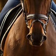20171127 BR Cortney Horses