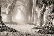 B&W: Trees