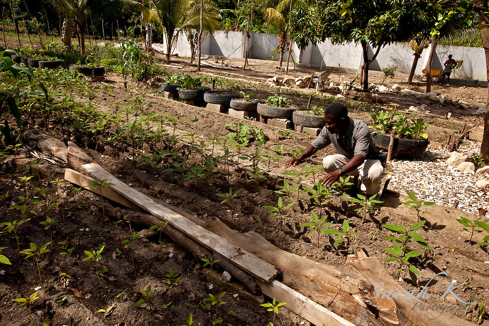 """Joseph Menorce, the gardener for the Presbyterian Mission in Haiti, a church-planting and school-building ministry,  grows fresh produce to distribute to the victims of the floods. Charles Amity, president of the Presbyterian Mission in Haiti, believes that growing fresh produce on his campus is smart way to give to local villagers who lost their own crops of fruits and vegetables when the floods destroyed many farms last September. """"The ministry was able to give them food, water, clothes because they have lost everything in this flood,"""" he said.  """"In some houses, we have distributed some money and food to help the families to survive."""""""