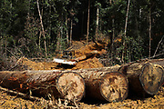 Borneo Stripped Bare<br /> <br /> Borneo, the third largest island in the world, divided between Indonesia, Malaysia and Brunei, was once covered with dense rainforests, but along with its tropical lowland and highland forests, there has been extensive deforestation since the 1960s, as the native economies of the region experienced rapid industrialisation.<br /> <br /> Approximately 73% of the island is Indonesian territory; the Indonesian name for the island, Kalimantan, is used in English to refer to the Indonesian-controlled territory.<br /> <br /> East and South Kalimantan is an Indonesian province in the east and south of the island of Borneo. It's known for its indigenous Dayak culture and rainforest areas. East and South Kalimantan are home to vast swaths of tropical rain forest that are fast dwindling as a result of mining, logging and plantations. These activities have taken their toll on the environment as well as the indigenous communities that have for generations called the forest their home. <br /> ©Afriadi Hikmal/Exclusivepix Media