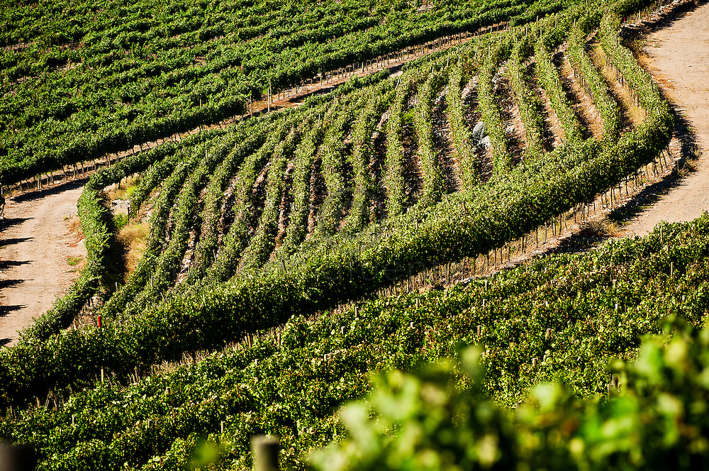 VIÑA DON MELCHOR DE CONCHA Y TORO EN PUENTE ALTO. Santiago de Chile. 21-03-2013 (©Alvaro de la Fuente/Triple.cl)VIÑEDO PIRQUE VIEJO, VIÑA CONCHA Y TORO EN PIRQUE. Santiago de Chile. 21-03-2013 (©Alvaro de la Fuente/Triple.cl)