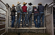 Young cowboys watch the Bull Riding after competing in the Boys Steer Riding during the 98th Falkland Stampede in Falkland, B.C. (2016)