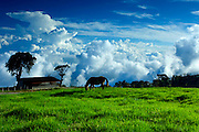 Costa Rica / Turrialba Volcano National Park / Tropical Cloud Forest / Towering Cumulus Clouds / Farm