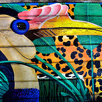 Rhinoceros Hornbill Mural Near Philadelphia Zoo in Philadelphia, Pennsylvania<br />